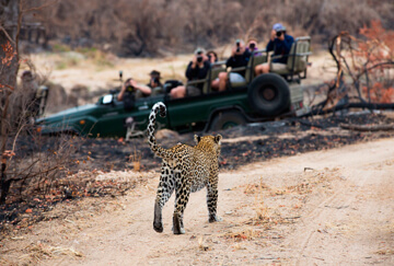 Hunting in South Africa: Organized safari industry