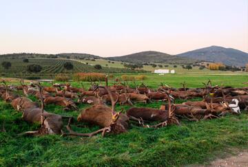 Spain hunting trips - BookYourHunt com