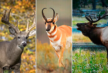 Hunting in United States: Vast selection of species