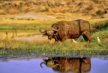Hunting in Zimbabwe: An affordable Big Five hunt